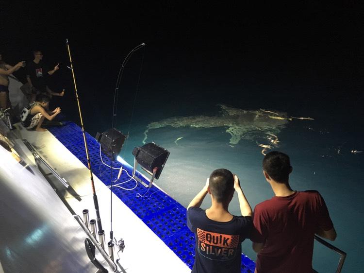 馬爾代夫夜觀護士鯊