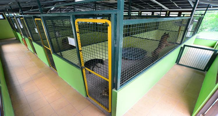 中大型犬室內園景房,房間寬敞同時可以容納一家2-4隻狗狗一起住.