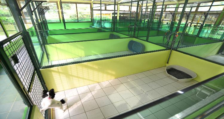 中小型犬室內園景房,房間寬敞同時可以容納一家2-3隻狗狗一起住
