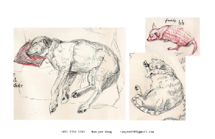 動物速寫 Animal Sketching