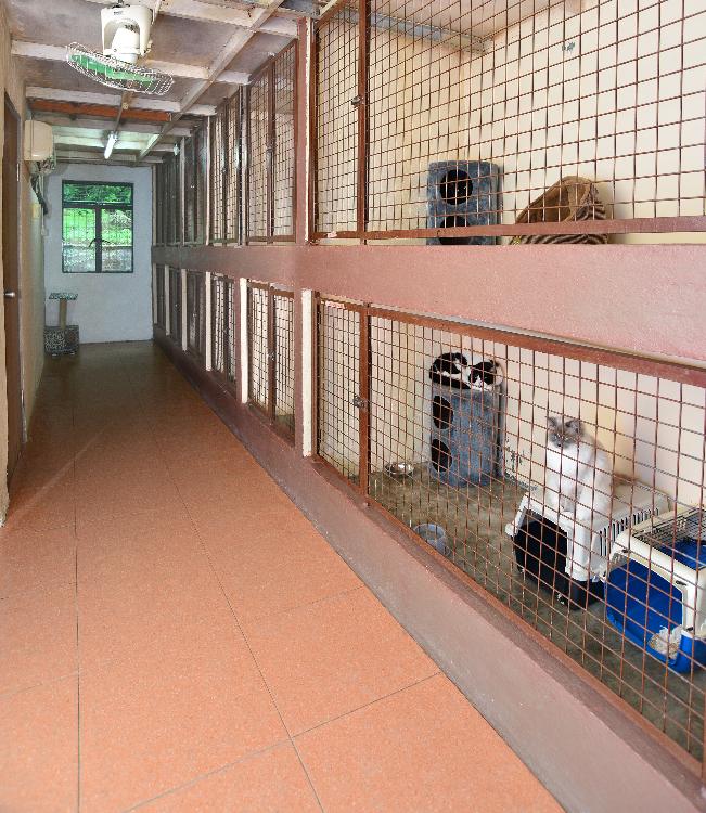 溫馨貓房,有冷氣、暖爐設施,貓每日可以外出房間散步1-2次