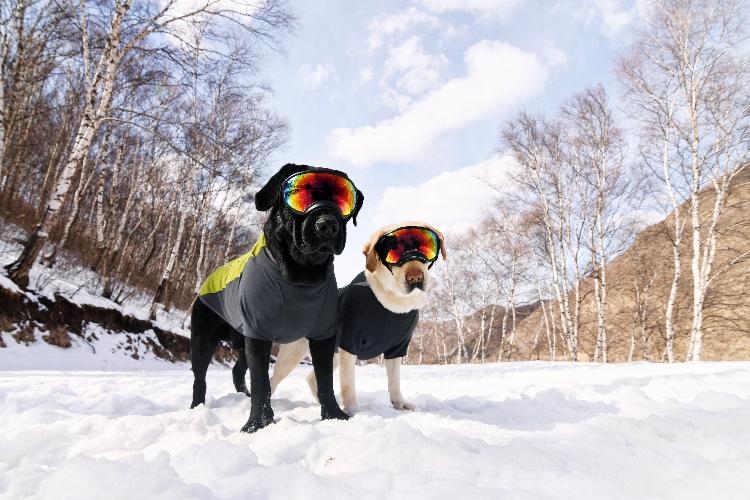 雪景拍攝🎬03